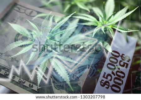 Marijuana Penny Stocks Exploding Stock Photo (Edit Now) 1303207798