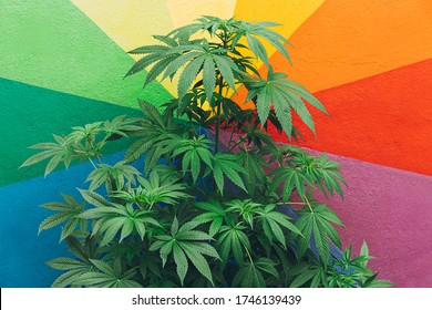 Marijuana plant with colorful wall in background - Cannabis medicine, healthy lifestyle and ecology concept