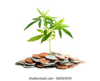 Marijuana plant growing in piles of money isolated on white background. Marijuana business concept.
