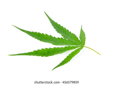 Marijuana Plants on white background