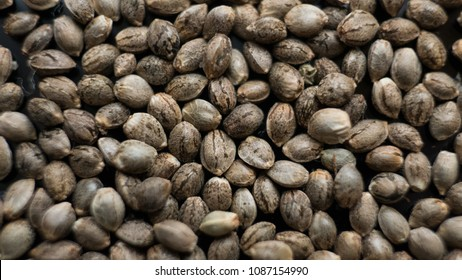 marijuana seeds close-up. Healthy cannabis seeds for millenial people