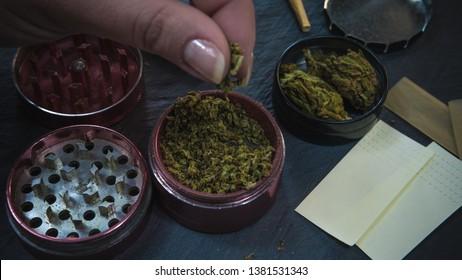 Marijuana weed in the females hand. Marijuana buds in the grinder. Cannabis is herbal medicine