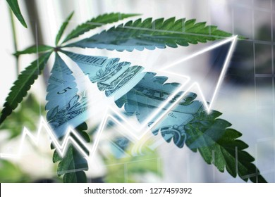Marijuana's Big Industry Profits