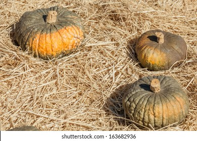 Marina Di Chioggia pumpkin has Blistery, bubbled, slate blue-green rind.