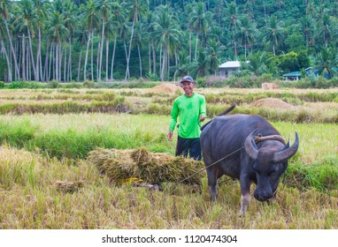 MARINDUQUE , PHILIPPINES - MARCH 31: Filipino farmer working at a rice field in Marinduque island The Philippines on March 31 2018