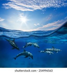 Marine animals design template. A flock of dolphins underwater with sunlight