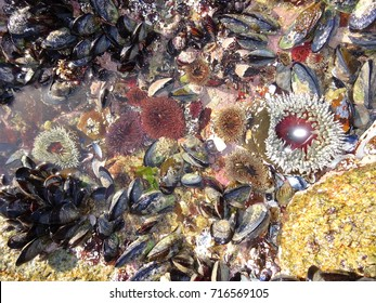 Marine animals at low tide, Southern Africa, Western Cape, West Coast National Park.