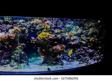 Marine aquarium and colorful fish