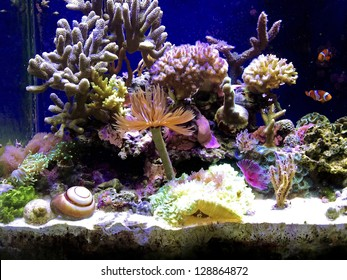 A marine aquarium with fishes and corals