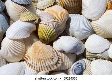 Marine background - shells