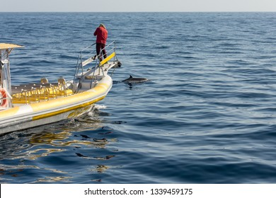 Marine biologist doing research and photographing whales.