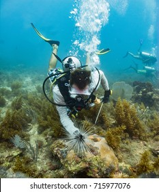 Marine biologist surverying sea urching in Honduras