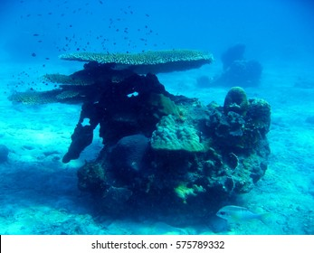 marine biology coral reef underwater