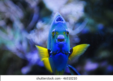 marine fish in a sea of blue and yellow