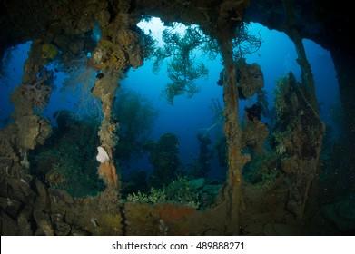 Marine growth on a sunken shipwreck