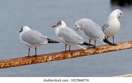 Marine gulls on rest near sea