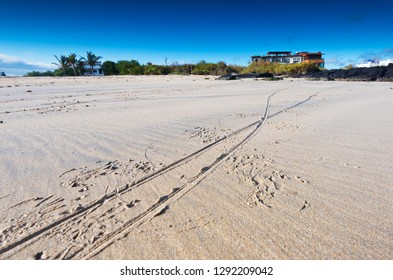 Marine iguana tracks on the beach in the Galapagos