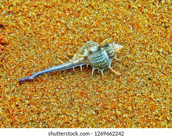 A marine invertebrate on the rough sand at the beach