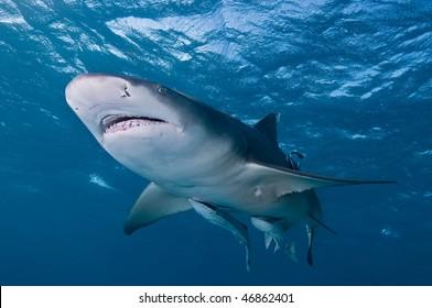 Marine Life, Bahamas
