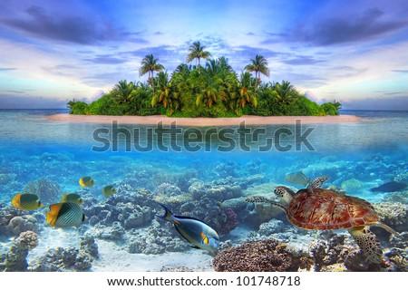 Marine life at tropical