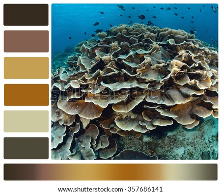 Marine Life Underwater Color Palette Swatches Stock Photo Edit Now