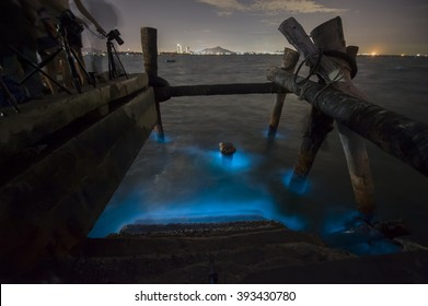 Marine Plankton glow in the dark in Thailand, Bioluminescence