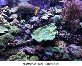 marine scenarios with marvelous invertebrates