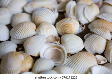 Marine small white seashells