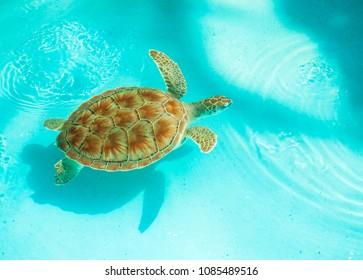 Marine turtle in Cayo Largo, Cuba