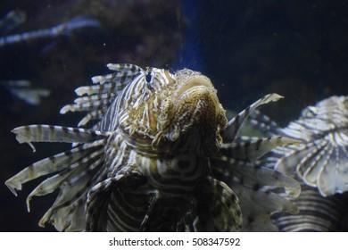 Marine underwater aquarium fish,sea horse