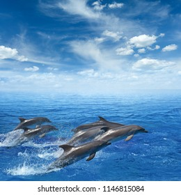 Marine wildlife background - dolphins jumping out of clear blue sea, blue sky with white clouds