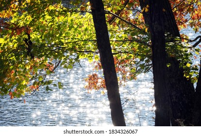 Marion, Virginia / USA - October 14, 2020: Early morning sunshine sparkling on Hungry Mother Lake and shining through fall foliage at Hungry Mother State Park in Marion, Virginia.