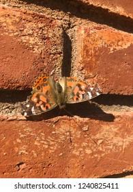 Mariposa en ladrillo