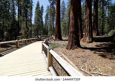 Mariposa Grove of Giant Sequoias during spring time in 2019