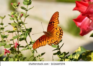 Mariposa naranja entre la naturaleza
