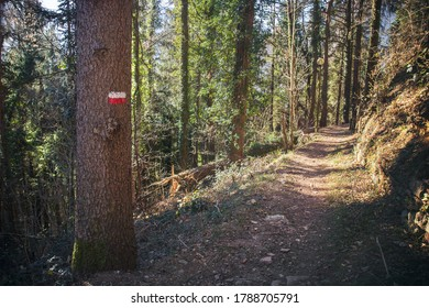 Marked tree on mountain path. Nature trail in Italy