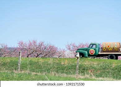 Markham, USA - April 18, 2018: Hartland Orchard with apple trees in bloom with flower blossoms, advertisement truck with pick your own in Shenandoah valley of Virginia with fence
