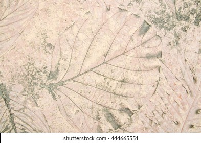 marks of nature leaf on the concrete background texture
