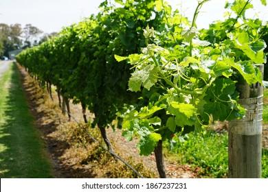 Marlboro wine region, New Zealand