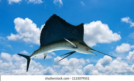 Marlin - Swordfish,Sailfish saltwater fish (Istiophorus) isolated on sky background