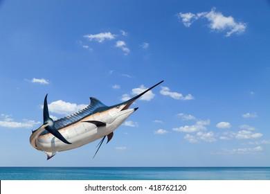 Marlin - Swordfish,Sailfish saltwater fish (Istiophorus) isolated on sea and sky  background