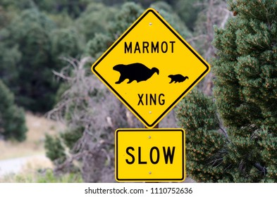 Marmot Crossing (Xing) Slow Sign in Great Basin National Park, White Pine County, Nevada, USA