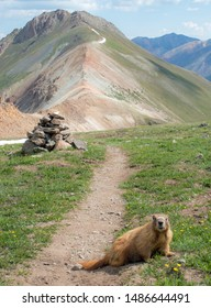 A marmot humorously blocking a hiking  trail in a mountain setting with a cairn in the background.