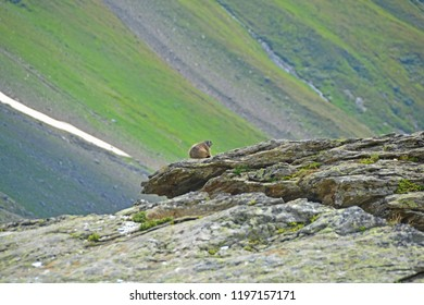 A marmot keeps look out for its family, sitting on a large slab of granite in the mountains