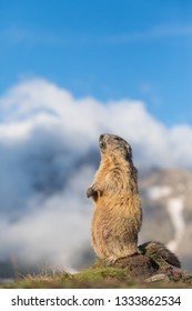 marmot standing on a rock with clouds and snow covered mountains in background