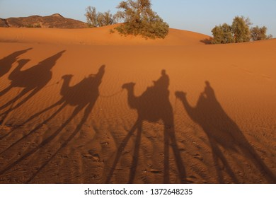 Marocco desert with camels shadows