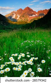 Maroon Bells and Mountain Daisy
