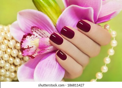 Maroon manicure on female hand with Orchid and a pearl bracelet .