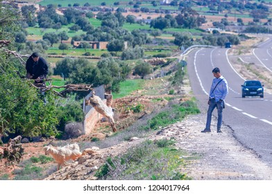 Marrakech, Morocco- February 25, 2018: Tourists and Moroccan standing near an argan tree full of goats in Morocco.