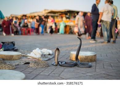 Marrakesh, Morocco, Africa - Domestic snakes in Jemaa el Fna square